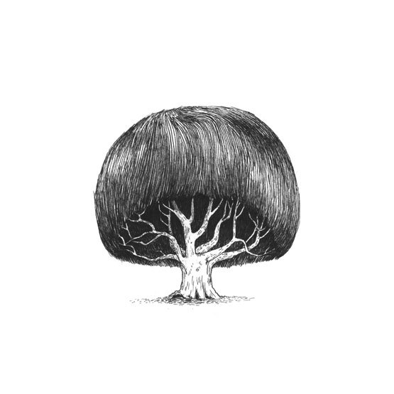11-Trees-With-Haircuts