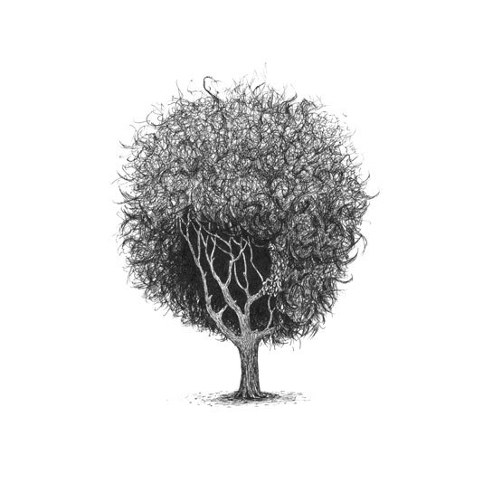 12-Trees-With-Haircuts
